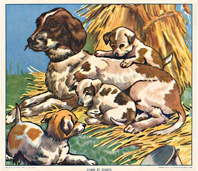 Signed - Chien et Chiots (dogs) border=